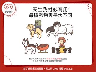【狗狗小學堂】天生我材必有用!每種狗狗專長大不同 寵物愛很大