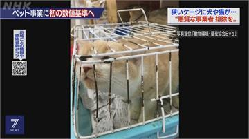 日本新制規範「毛孩產業」 寵物店嘆乾脆關門