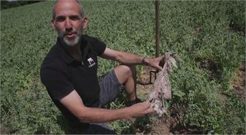 法農夫內褲埋田裡 評估土壤健康程度