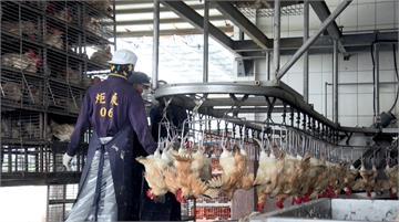 清真認證取得不易 嚴謹作業流程讓臺灣美味料理飄香穆斯林市場|田下大小事|EP18