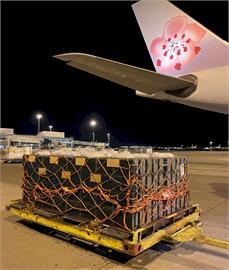 華航最迷你嬌客 首載活體蜜蜂飛加拿大助果園授粉