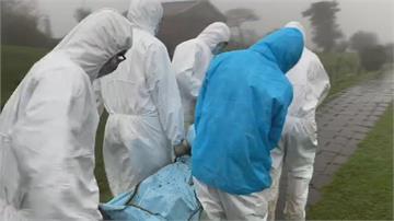 擎天崗水牛群暴斃 初步排除傳染病可能