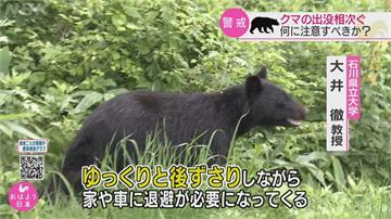 注意熊出沒! 棕熊闖賣場逛大街遭射殺 日本石川縣今年已11人遭熊攻擊
