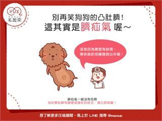 【狗狗健康】別再笑狗狗的凸肚臍!這其實是臍疝氣喔~|寵物愛很大