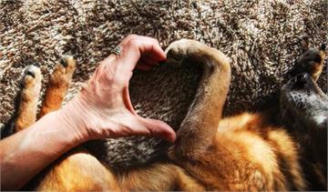 網友討論《動物做過的暖心事》有時候牠們比親朋好友還關心你♥