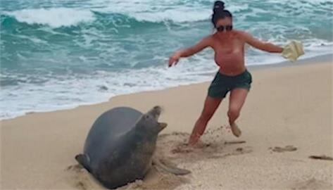 野生動物別亂摸! 美夫婦摸夏威夷海豹 影片上網引眾怒