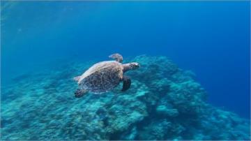塞席爾海下3000公尺大揭秘!科學家建立海洋資料庫