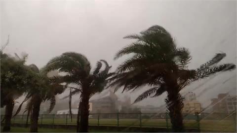 盧碧登陸中國!澎湖雨勢增強 風吹椰子樹搖晃