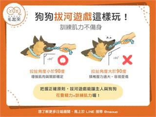 【狗貓訓練術】狗狗拔河遊戲這樣玩,訓練肌力不傷身!|寵物愛很大