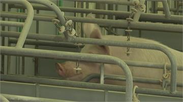 德國爆發首例非洲豬瘟直航班機行李全面檢疫