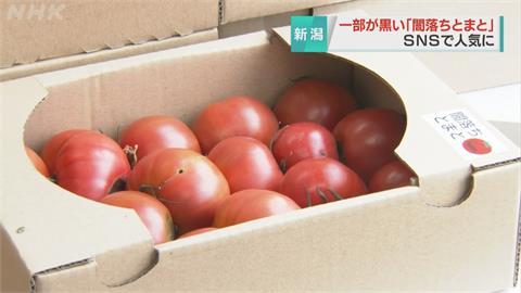 表面佈滿黑斑超恐怖...日本「魔化番茄」香甜可口