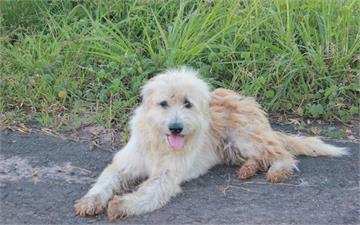 等了主人四年的《泰國忠犬Leo》奇蹟的與主人相遇但故事的結果...