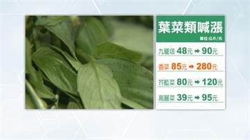 葉菜類好貴!九層塔漲一倍 香菜每公斤飆到280元