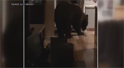 一早醒來發現廚房裡有熊 加州居民傻眼