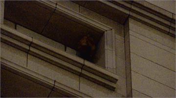立院旁豪宅驚現蜂巢 消防隊架雲梯車射水移除