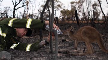 澳洲彭里斯飆攝氏48.9度 無情野火釀24死