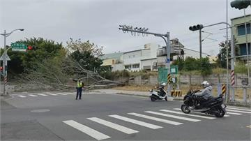 天冷風大 台南永康路樹倒塌占據車道
