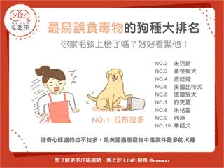 【狗貓餵養知識】最容易誤食毒物的狗種大排名!你家毛孩上榜了嗎?|寵物愛很大