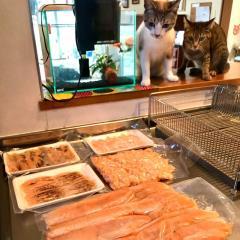 貓奴日常《被完全鎖定的食材》連等待解凍都無法放心從現場離開...