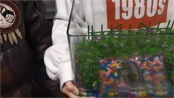 2隻小龜與魚缸3600元  士林夜市再爆坑人