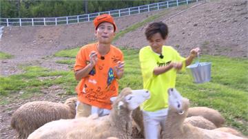 浩角翔起遊清境 體驗一日牧羊人
