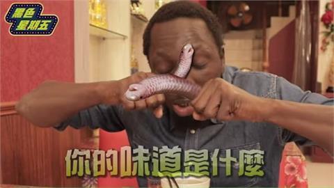 瞠目結「蛇」!黑人大啖眼鏡蛇全餐 蛇血下肚秒飆淚