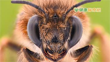 小心蜜蜂、虎頭蜂出沒! 戶外登山被蜂螫時,該如何緊急處理?