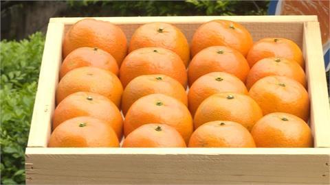 中國陸續禁鳳梨、釋迦及蓮霧 農委會估再來是柑橘