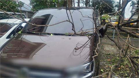 強陣風吹倒樹木毀車 業者控台鐵賠償沒下文