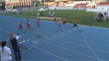 來亂的!流浪貓闖入短跑賽道 選手險絆倒 一個MOVE閃過一劫