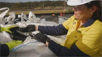 排泄物汙水也能發電? 澳洲布里斯本力推再生能源 汙水還能變成生物碳