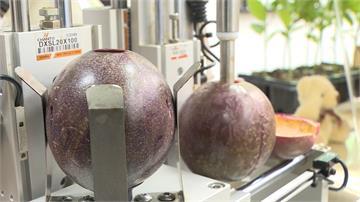 全球第1台!百香果自動化取漿機 期盼降低百萬人力成本