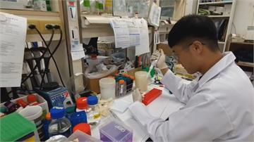 石斑魚提煉出「抗菌肽」 能研發成藥物治燒燙傷