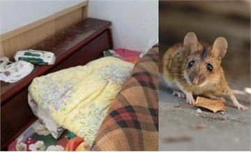 北市月租2千…遇「鼠滿為患」求償2萬!房東好悶