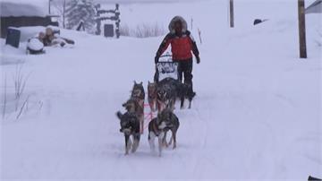 阿拉斯加雪橇犬長征賽 兩周賽程挑戰默契、耐力