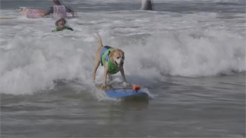 就。很。萌 毛孩秀絕技 加州第12屆狗狗衝浪賽登場