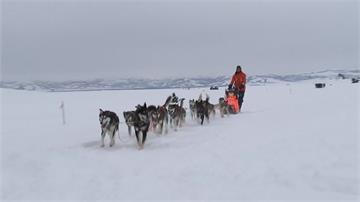 阿拉斯加狗拉雪橇賽 挪威音樂家跨界挑戰領先