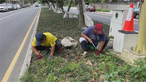 去年7月通過!花蓮限制公園、道路等8大區域禁用除草劑