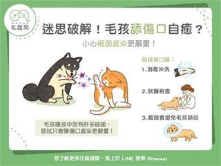 【狗貓健康】毛孩舔傷口自癒?小心細菌感染更嚴重!|寵物愛很大