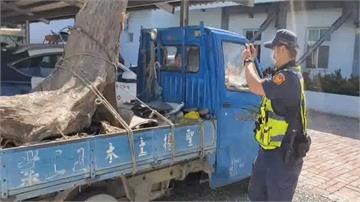 台東山老鼠非法盜伐「牛樟樹」 重達270公斤 市價近9萬元!
