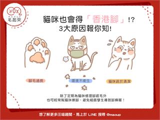 【喵喵小學堂】貓咪也會得香港腳?3大原因報你知!