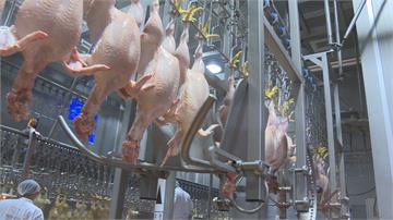 雞隻屠體泡含氯消毒劑 農委會:防變質問題