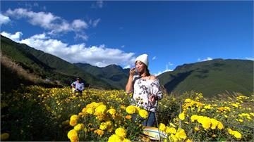 有吃有玩! 武陵農場四季四景邀客來體驗