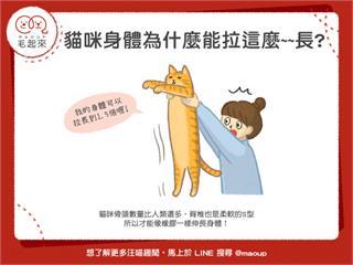【貓貓小學堂】貓咪身體為什麼能拉這麼~~長?|寵物愛很大