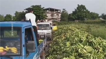 滿坑滿谷香蕉被當垃圾? 屏東縣府闢謠:次級品當綠肥用