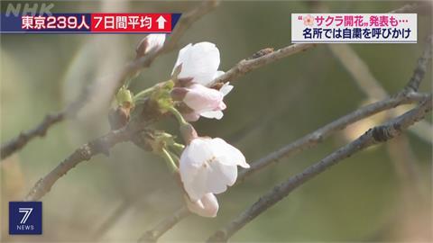 東京櫻花開了!熱門賞花地點貼告示 籲不要群聚賞櫻