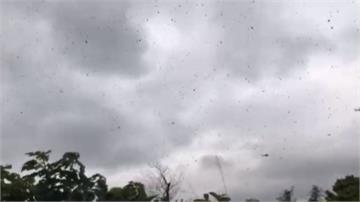 群蜂亂舞恐是天有異象?蜂農曝驚人真相
