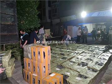 中國殘忍「玩命」快遞!貨車廂塞150「活體盲盒」?1盒塞3隻貓險悶死