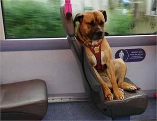 一張《獨自搭公車的浪浪》照片感動英國人 自己走出了回家的路