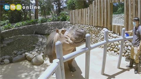 疫情宅家「線上逛動物園」 明星動物萌翻天